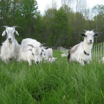 The Yearlings
