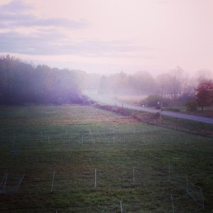 Lower pasture