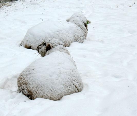 snowpuffs