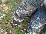 turkey-tails.jpg