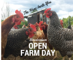 Open Farm Day 16