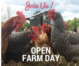 open-farm-day-17