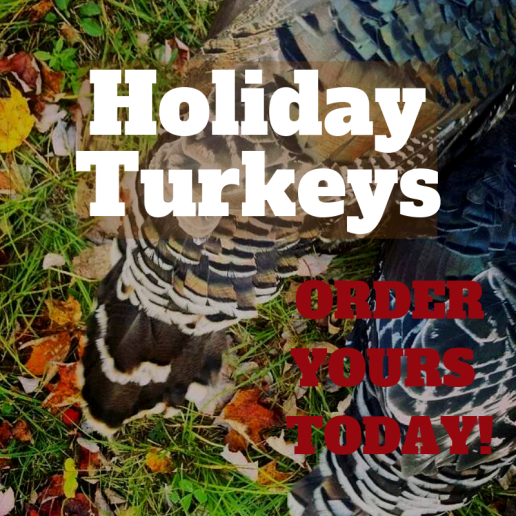Holiday Turkeys-2